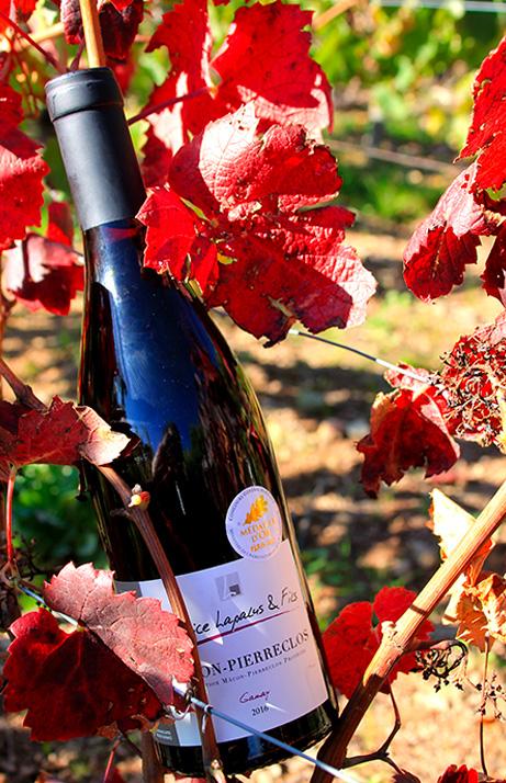 Bouteille de Mâcon Pierreclos dans les vignes