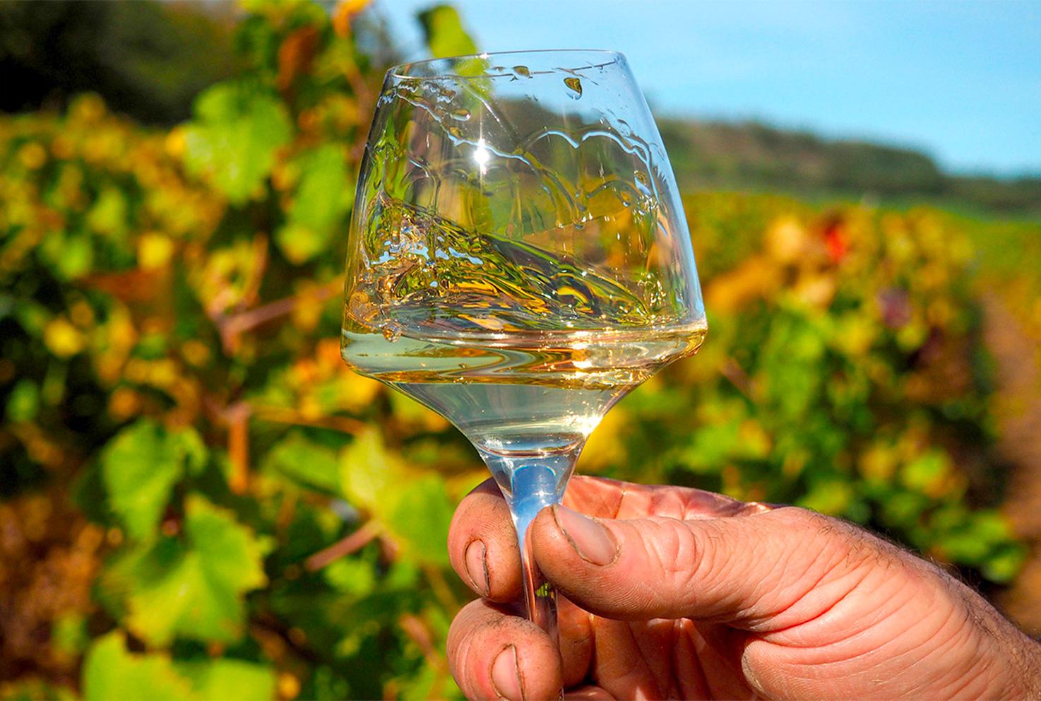 Vin blanc Lapalus